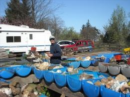 Tualatin Valley Rock Club field trip to Tillamook Oregon (6)